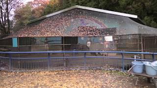 エミュー舎 (福知山市動物園) 2019年11月24日