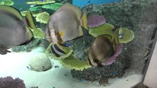 サンゴ礁の海 (栃木県なかがわ水遊園) 2018年12月8日