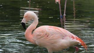 フラミンゴ池 (東武動物公園) 2020年9月18日