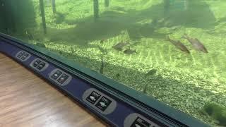 1-1 内湖・ヨシ原にすむ生き物たち (琵琶湖博物館 水族展示室) 2019年10月30日