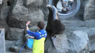 Marine Mammal Kingdom Feeding time (TOBA AQUARIUM, Mie, Japan) December 25, 2020