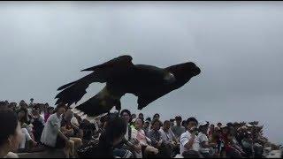 那須どうぶつ王国のバードパフォーマンスショー (Bird show) 2017年7月23日