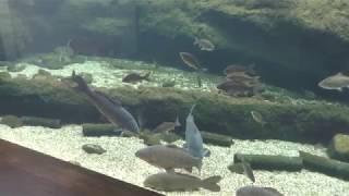 那珂川の魚たち (栃木県なかがわ水遊園) 2018年12月8日