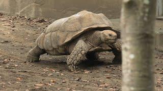インコとゾウガメの森 (千葉市動物公園) 2020年9月17日