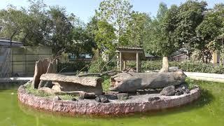 ボリビアリスザル (熊本市動植物園) 2019年4月18日