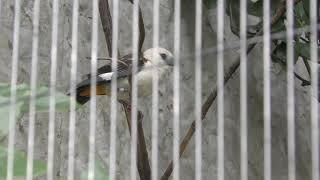 シロガシラウシハタオリ と パラワンコクジャク (上野動物園) 2018年12月11日