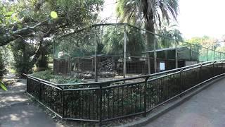 カピバラ (宮崎市フェニックス自然動物園) 2019年12月9日