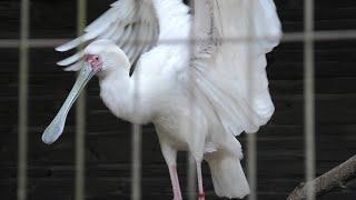 トキ・サギ エリア (千葉市動物公園) 2020年9月17日