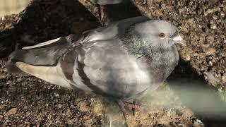 家禽舎 (ダチョウ園 ふれあいミニ動物園) 2019年12月9日