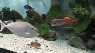 水槽『サンゴ礁の魚たち』 (志摩マリンランド) 2018年1月2日