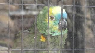 インコ舎 (松本市アルプス公園 小鳥と小動物の森) 2019年4月4日
