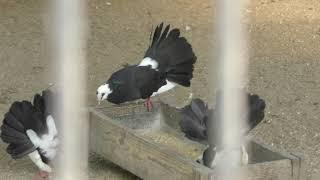 鳥舎1 (弥生いこいの広場) 2019年8月7日