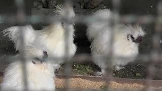 鳥舎 (打吹公園 小動物園) 2019年11月28日