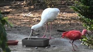 鳥舎 (宮崎市フェニックス自然動物園) 2019年12月9日