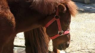 ノマウマ Noma horse