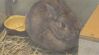 4種のウサギ (仙台市八木山動物公園/セルコホーム ズーパラダイス八木山) 2018年1月20日