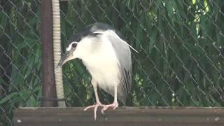 鳥舎 (王子動物園) 2018年9月16日
