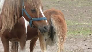Horse (Kawayu Park Horse Ranch, Hokkaido, Japan) June 29, 2019