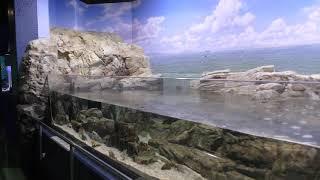 E 潮溜まりの生き物 (碧南海浜水族館) 2019年11月2日