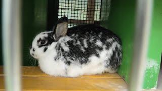 Rabbit (Sakura Kusabue no Oka, Chiba, Japan) September 12, 2020