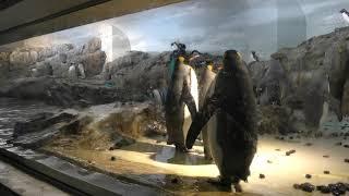 極地 ペンギン (のんほいパーク/豊橋総合動植物公園) 2018年12月13日