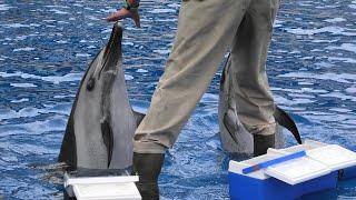 イルカのトレーニング (大分マリーンパレス水族館 うみたまご) 2019年12月5日