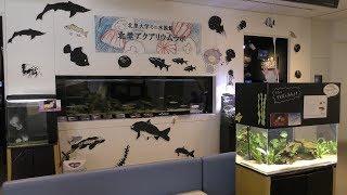 北里アクアリウムラボ (北里大学海洋生命科学部ミニ水族館) 2018年11月30日