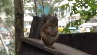 リスが自由に動き回るリスの小径 (井の頭自然文化園) 2017年9月23日