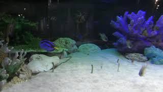 チンアナゴ水槽 (碧南海浜水族館) 2019年11月2日