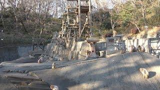 ニホンザル (多摩動物公園) 2019年1月18日