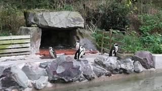 ペンギンプール (松江フォーゲルパーク) 2019年11月29日