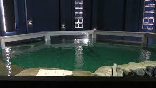 ネズミイルカ水槽 (おたる水族館) 2019年6月14日