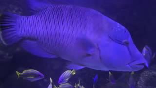 サンゴ礁を彩る魚たち (八景島シーパラダイス) 2018年1月7日