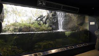 3-3 河川上流(渓流)の生き物たち (琵琶湖博物館 水族展示室) 2019年10月30日
