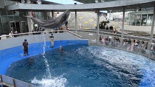 イルカのパフォーマンス (大分マリーンパレス水族館 うみたまご) 2019年12月5日