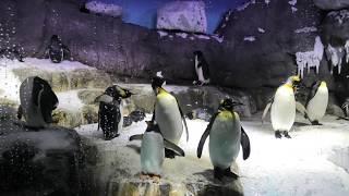 南極大陸 (海遊館) 2019年11月20日
