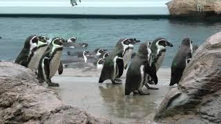 ペンギン館・屋外プール (島根県立しまね海洋館 アクアス) 2019年12月2日
