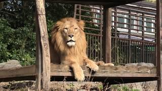 サバンナエリア (愛媛県立 とべ動物園) 2019年12月25日