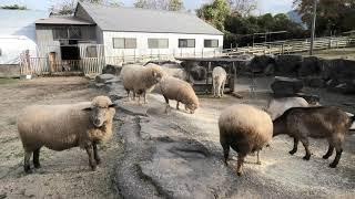 大山トムソーヤ牧場 (2019年11月29日)
