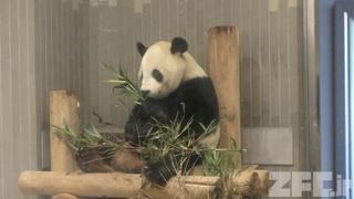 上野動物園 (2017年10月29日)