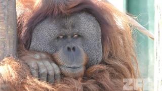 Ichikawa Zoological and Botanical Garden (March 4, 2018)