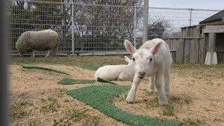 IKUTOPIA SHOKU HANA Animal Contact Center (April 8, 2019)
