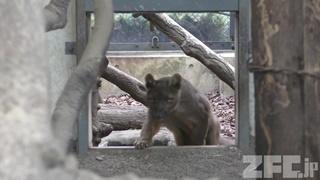上野動物園 (2018年1月8日)