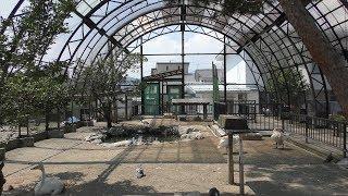 河北町児童動物園 (2019年8月5日)