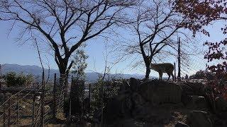 飯田市立動物園 (2019年1月19日)