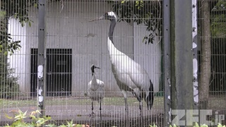 八幡山公園 動物舎 (2018年4月30日)