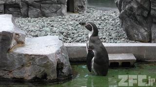 姫路市立水族館 (2019年2月13日)