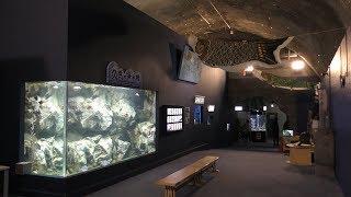 久慈地下水族科学館もぐらんぴあ (2019年8月11日)