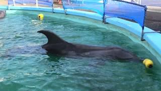 MUROTO Dolphin Center (December 20, 2019)