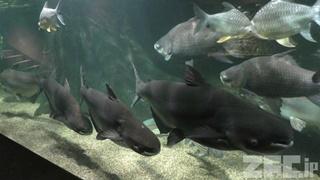 世界淡水魚園水族館 アクア・トト ぎふ (2019年1月25日)